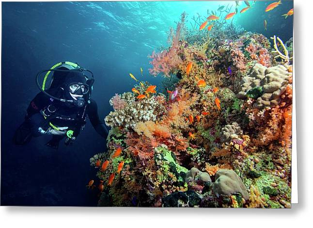 Diver With Corals And Reef Fish Greeting Card by Louise Murray
