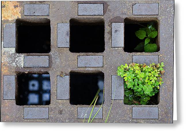 Drain Greeting Cards - Diversity Greeting Card by Rick Mosher