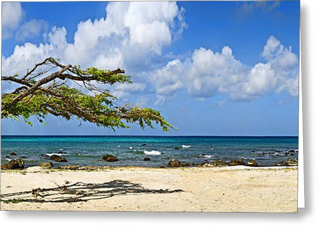Aruba Greeting Cards - Divi Divi Tree Caesalpinia Coriaria Greeting Card by Panoramic Images