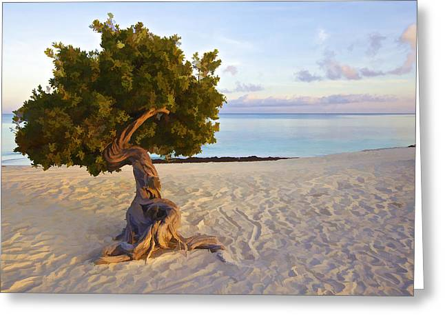 David Letts Greeting Cards - Divi Divi Tree of Aruba Greeting Card by David Letts