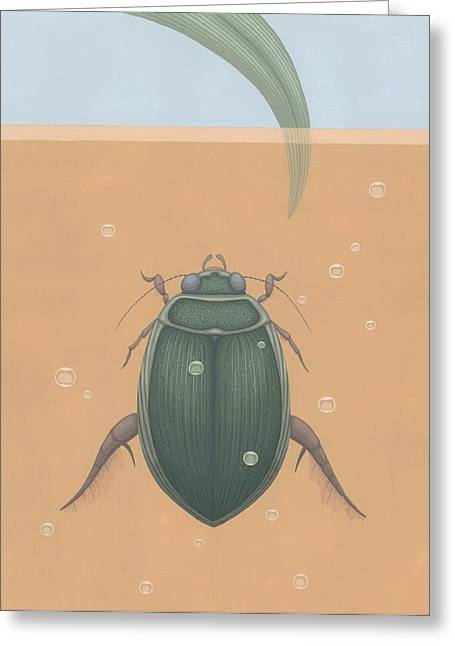 Beetle Paintings Greeting Cards - Diving Beetle Greeting Card by Nathan Marcy