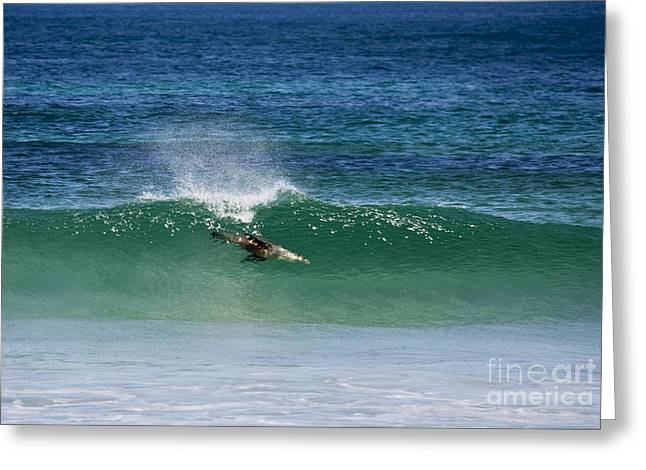 Ocean Mammals Greeting Cards - Diving Beneath the Curl Greeting Card by Mike Dawson
