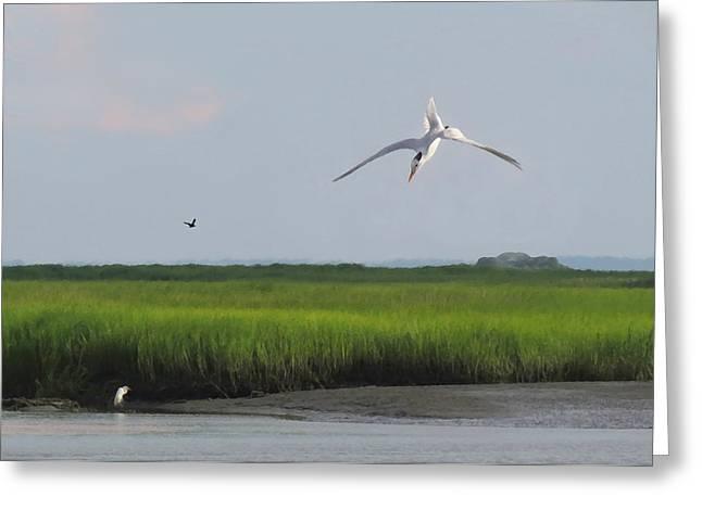 Tern Digital Greeting Cards - Diving Tern Greeting Card by Deborah Smith