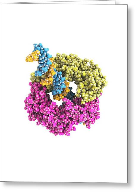 Dna Clamp Greeting Card by Ramon Andrade 3dciencia