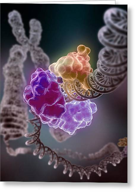 Helix Greeting Cards - DNA Double Helix Greeting Card by Mountain Dreams