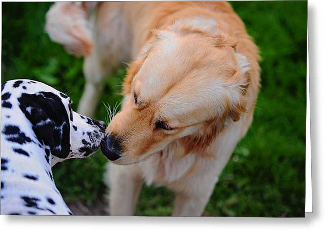 Animals Love Greeting Cards - Do I Know You ? Meet Up with Friend.  Kokkie. Dalmation Dog Greeting Card by Jenny Rainbow