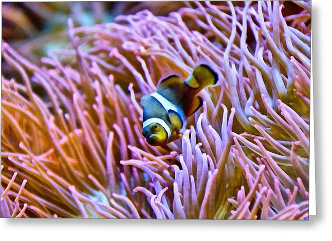 Clown Fish Photographs Greeting Cards - Do I Look Like A Clown To You Greeting Card by Angelina Vick