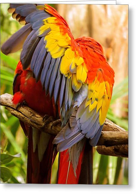 Macaw Art Print Greeting Cards - Do not disturb Greeting Card by Zina Stromberg