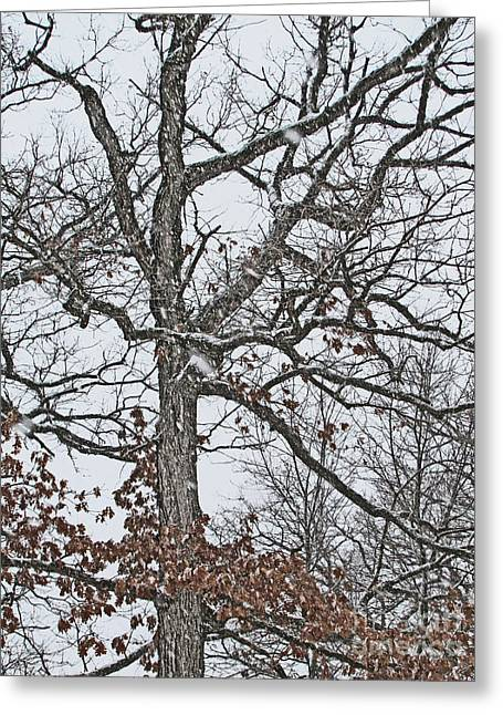 Snowstorm Prints Greeting Cards - Do Not Let Go Even In The Snow Greeting Card by Adri Turner