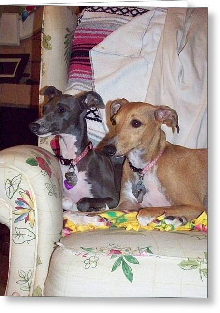 Greyhound Greeting Cards Greeting Cards - Do you see what I see Greeting Card by Steve La Motte