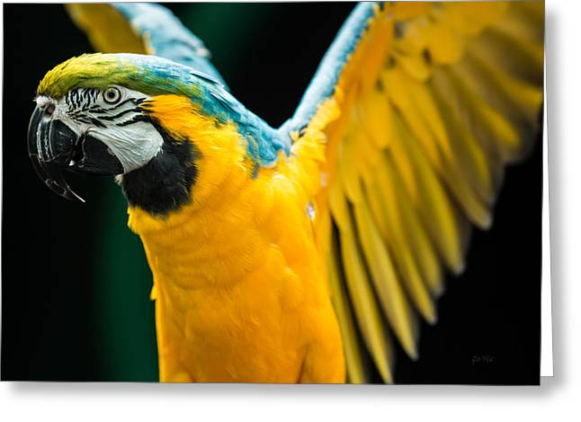 Clever Digital Greeting Cards - Do your exercise daily blue and yellow macaw Greeting Card by Eti Reid