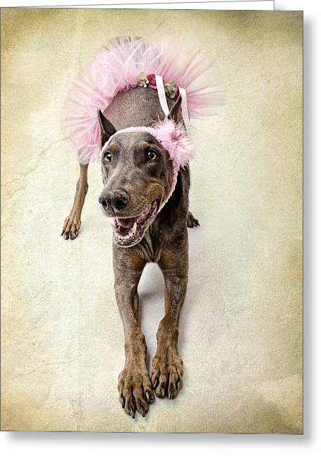 Dog Photographs Greeting Cards - Doberman Ballerina  Greeting Card by Susan  Schmitz