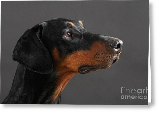 Guard Dog Greeting Cards - Doberman Pinscher Dog Greeting Card by Christine Steimer