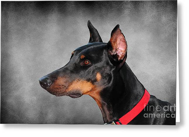 Guard Dog Greeting Cards - Doberman Pinscher Greeting Card by Paul Ward