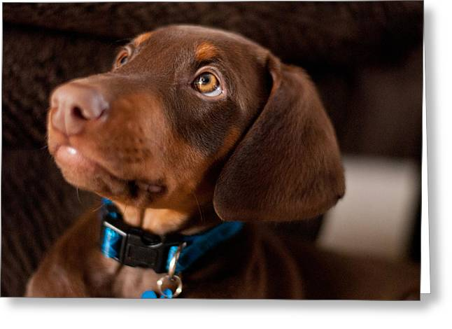 Doby Greeting Cards - Doberman Puppy Greeting Card by Cynthia Stephens