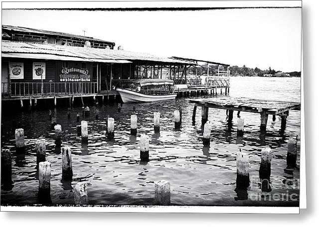 Boats At Dock Greeting Cards - Docked at Bocas Greeting Card by John Rizzuto