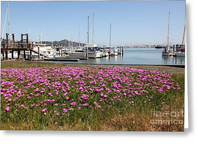 Sailboats In Harbor Photographs Greeting Cards - Docks at Sausalito California 5D22695 Greeting Card by Wingsdomain Art and Photography