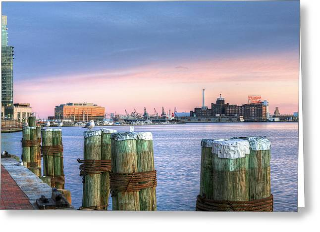 Gulls Greeting Cards - Dockside Greeting Card by JC Findley