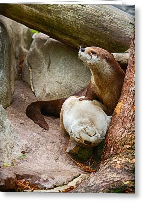 Nature Center Greeting Cards - Doctor Otter at the Western North Carolina Nature Center Greeting Card by John Haldane