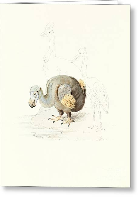 Dodo Greeting Cards - Dodo, 1848 Artwork Greeting Card by Royal Institution Of Great Britain