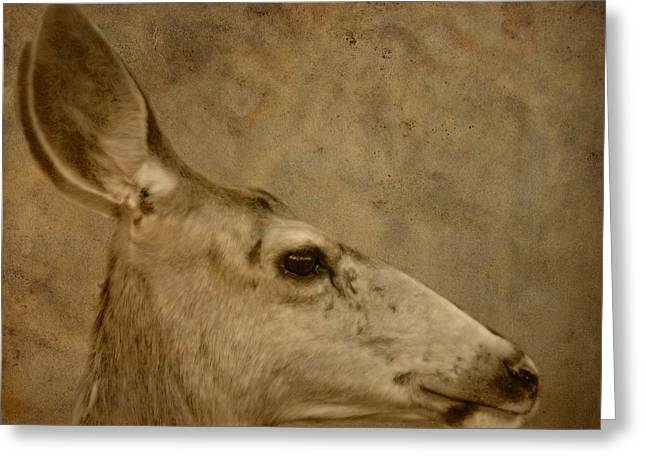 Mating Season Greeting Cards - Doe In Autumn Greeting Card by Dan Sproul