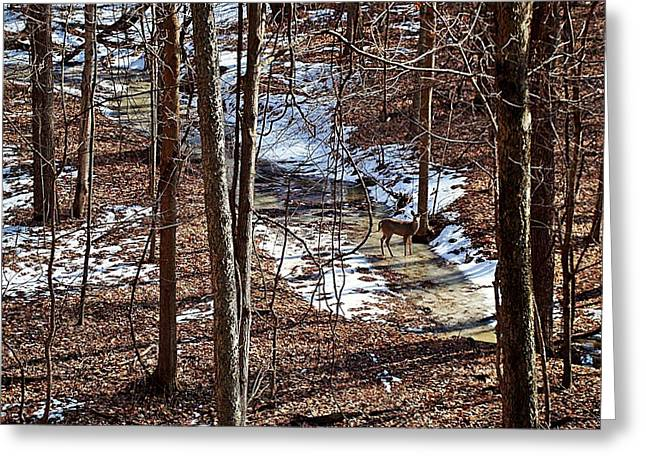 Indiana Winters Digital Art Greeting Cards - Doe on Ice Greeting Card by BackHome Images
