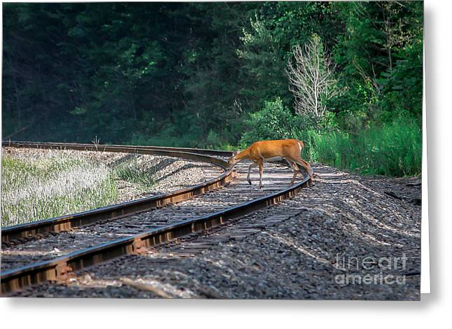 White Pyrography Greeting Cards - Doe on the Tracks Greeting Card by Rebecca Brooks