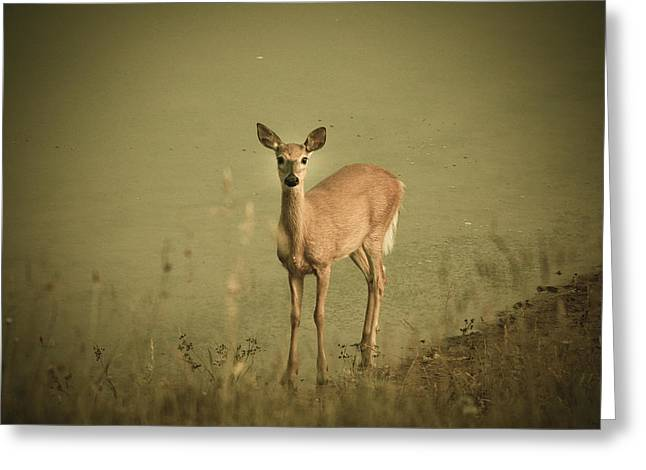 Does Greeting Cards - Doe Greeting Card by Shane Holsclaw