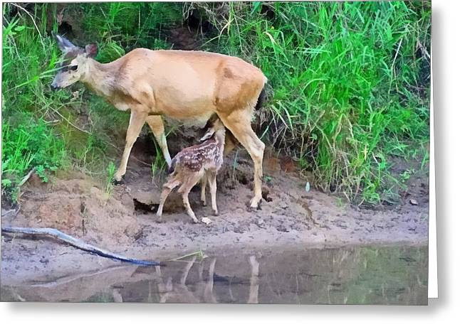 Doe With Nursing Fawn Greeting Card by Nick Kloepping