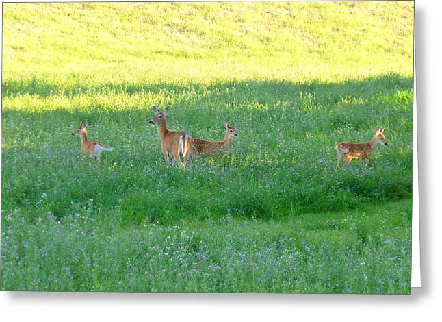 Triplets Greeting Cards - Doe With Triplets Greeting Card by Will Borden