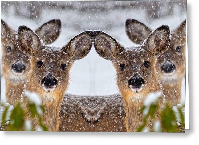 Doe You See Me Greeting Card by Betsy Knapp