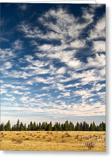 Cypress Hills Greeting Cards - Does Earth Dream of Sky? Greeting Card by Royce Howland