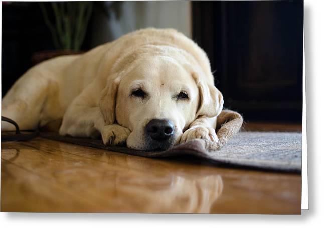 Yellow Dog Greeting Cards - Dog 1 Greeting Card by Justin Matoi