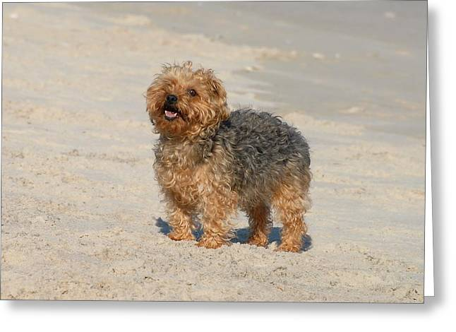 Litter Mates Photographs Greeting Cards - Dog 138 Greeting Card by Joyce StJames
