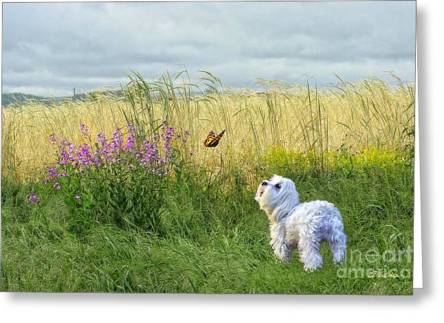 Dog And Butterfly Greeting Card by Andrea Auletta