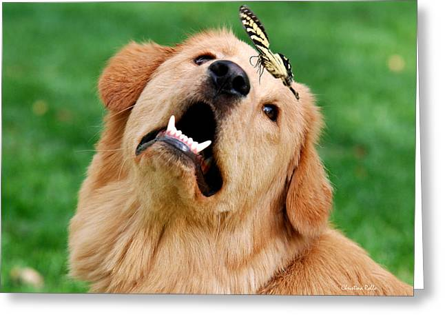 Puppies Print Greeting Cards - Dog And Butterfly Greeting Card by Christina Rollo