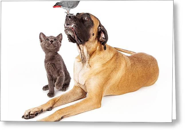 English Mastiff Greeting Cards - Dog and cat looking at a bird Greeting Card by Susan  Schmitz