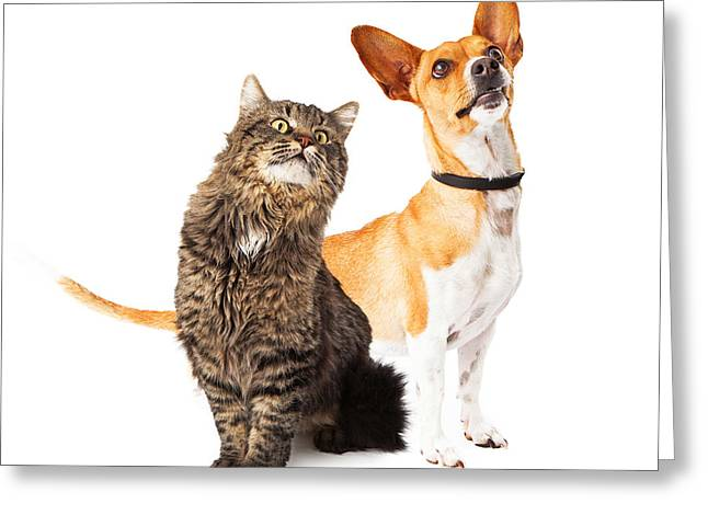 Mutt Greeting Cards - Dog and Cat Looking Up Together Greeting Card by Susan  Schmitz