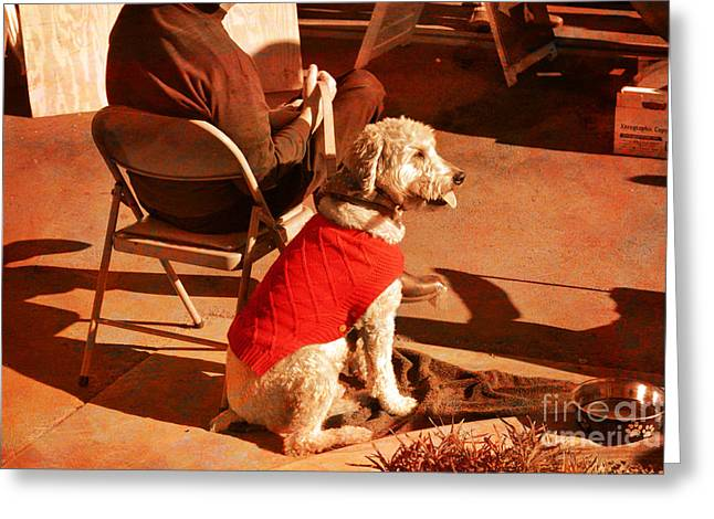 Dog Sweaters Greeting Cards - Dog and his Best Friend Greeting Card by Beverly Guilliams