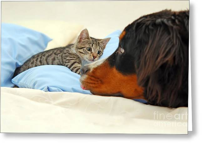 Gray Hair Greeting Cards - Dog and kitten Greeting Card by Michal Bednarek