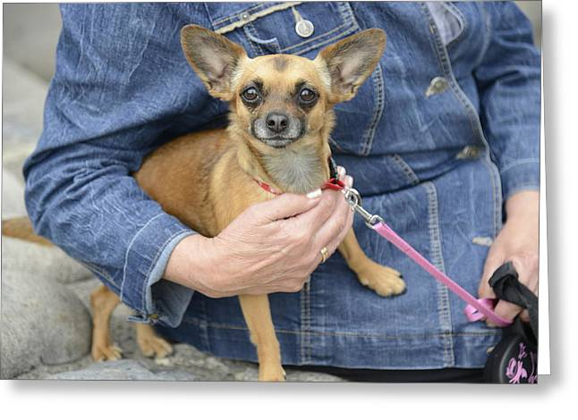 True Friendship Greeting Cards - Dog And True Friendship 13 Greeting Card by Andre Theophane SITCHET-KANDA