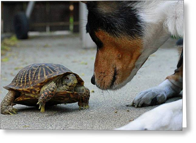 Turtle Pyrography Greeting Cards - Dog and Turtle Greeting Card by Shoal Hollingsworth