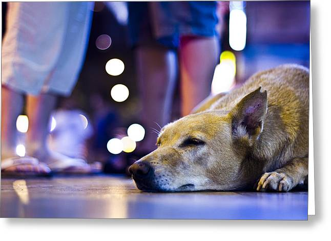 Limelight Greeting Cards - Dog at Peace  Greeting Card by Rohan Lakhlani