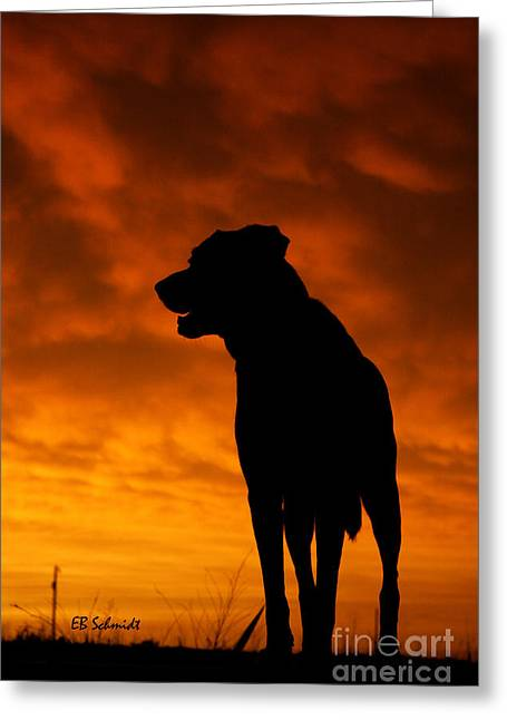 Dog At Sunset Greeting Card by E B Schmidt