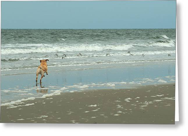 Prancing Bird Greeting Cards - Dog Day Beach Greeting Card by J H Clery
