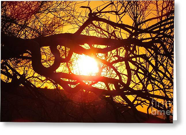 Amazing Sunset Greeting Cards - Dog days of summer Greeting Card by Chandra Nyleen