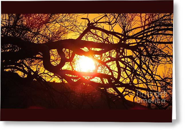 Sunset Greeting Cards Greeting Cards - Dog days of summer Greeting Card by Chandra Nyleen