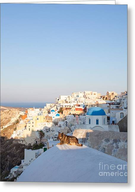 Sea Dog Prints Greeting Cards - Dog enjoying sunrise over greek village - Santorini Greeting Card by Matteo Colombo