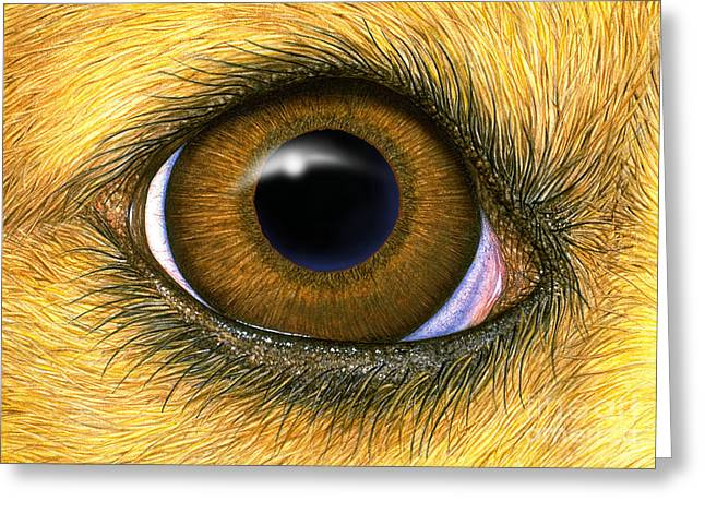 Eyelids Greeting Cards - Dog Eye Greeting Card by Laurie OKeefe