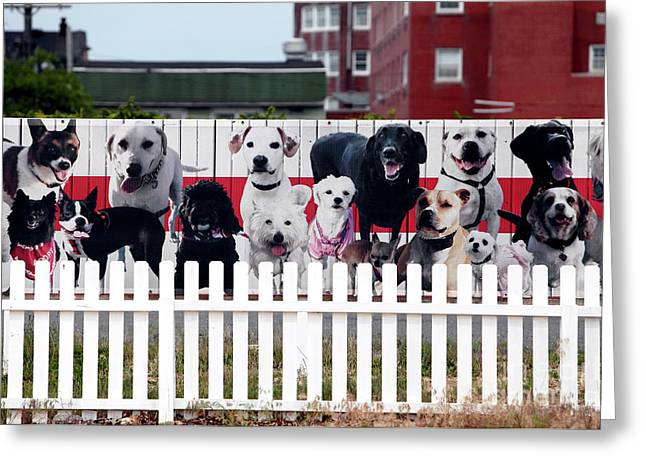 Dog Pics Greeting Cards - Dog Fence Greeting Card by John Rizzuto